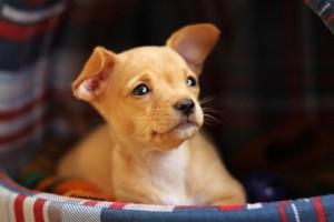 закупка вольеров для собак